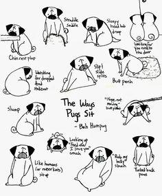 Bah Humpug: The Ways Pugs Sit