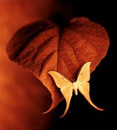 Fabulous. Luna Moth on a rusty leaf.