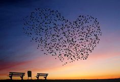 Photograph - Love Is In The Air by Annemieke Stuij