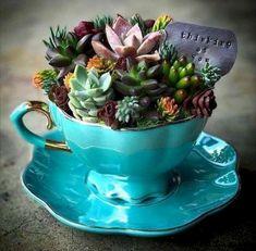 Tea-cup anything is adorable :) Fleurs Diy, Succulent Garden Ideas, Mini Cactus Garden, Succulent Planters, Succulents Diy, Planting Succulents, Succulent Arrangements, Succulents In Containers, Succulent Gardening