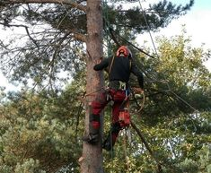 Professional tree care is an investment in the future of a beautiful and vital natural asset.Don't let bad workmanship contribute to the destruction of your landscape.  Piece2gether let you hire a rated tree surgeon while improving your community. Post your job and get quotes.