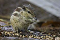 wildlife-photography-telephoto-lens-03.jpg