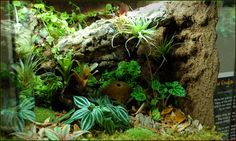 """(link) FANTASTIC step by step instructions on how to DIY your own terrarium! ~~~ NOTE: this is a link to site that gives a very complex, """"designer"""" DIY terrarium tutorial ~ for more great PINs w/good links visit ~ have fun! Gecko Terrarium, Terrarium Diy, Reptile Room, Reptile Cage, Reptile Tanks, Vivarium, Art Bio, Bio Garden, Frog Tank"""