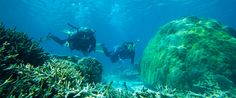... Ecotourism - the Great Barrier Reef