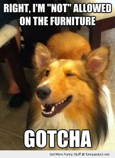 This is sooo my dog!!!