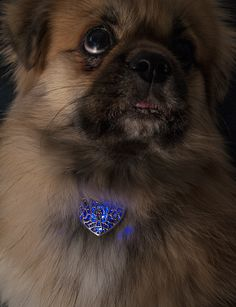 Digital dog jewelry