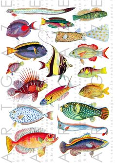 TROPICAL FISHES With Dazzling Colors Vintage Illustration. Exotic Ocean Fishes Clip Art Digital Printable Vintage Download.