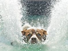 A  dog jumps into a pool  during the dog diving competition at the International dog and cat show, Hund und Katz, in Leipzig, Germany. Six thousand dogs and 300 cats from all over the world take part at the event.