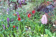 Wild flowers on walking vacations, anemones