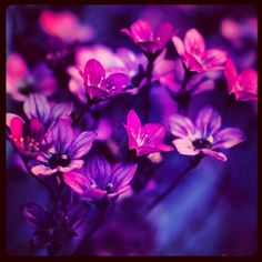 Beautiful purple flowers .....print then frame it .....you'll be happy you did