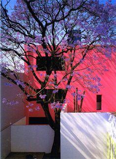 Casa Gilardi in Mexico City designed by architect Luis Barragan. Murs Roses, Art Et Architecture, Modernisme, Home Design, Interior And Exterior, Landscape Design, Cool Designs, Villa, Cool Stuff