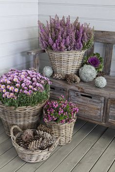 Love the colors of lavender with wicker basket and rustic bench