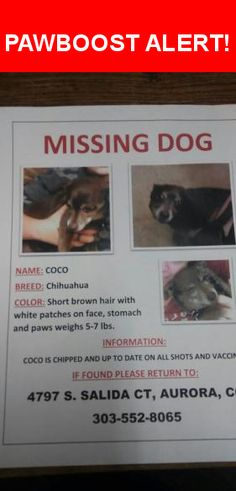 Please spread the word! Coco was last seen in Aurora, CO 80015.  Message from Owner: Coco is a 12 year old brown with white patches Chihuahua, that has been apart of our family since she was 9 weeks old. She has a great smile when she is happy even with a few missing teeth. Coco is sneaky and escaped from our back yard. But her dance moves and sweet charm are missed very much.  Nearest Address: Near E Layton Dr & S Salida Ct