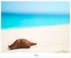 I love you, cute little starfish.