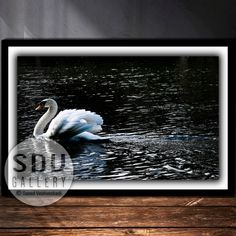 Downloadable image, digital photo, printable wall art, swan, river, water, nature, bird, swimming, spring, reflection, Vienna, Austria Vienna Austria, Photo Tree, Landscape Photos, Nature Photos, Printable Wall Art, Swan, Reflection, Nature Photography, Digital Art