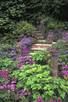 North side of house?  Greens and purples for shade. (Locke Heemstra: English Garden)