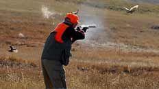 Orvis endorsed wingshooting in Montana, Pheasant Hunting, Bird Hunting, Upland Hunting Pheasant Hunting, Wild Birds, Habitats, Montana, Sage, Safari, Wildlife, The Incredibles, Flathead Lake Montana