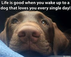 New meme compilation (cat memes,dog memes,pets memes,animal memes) Animal Quotes, Animal Memes, Animal Signs, Animal Humor, I Love Dogs, Puppy Love, Dog Lady, Dog Rules, Dogs And Puppies