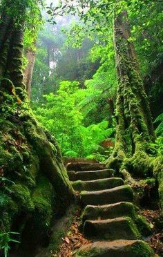 mystical forests in world travel - magical!