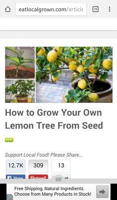 Grow your own Lemons
