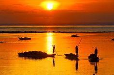 Sunset Seaweed Harvest in Indonesia