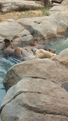 Riverbank Zoo, Kangaroo, Animals, Baby Bjorn, Animales, Animaux, Animal, Animais