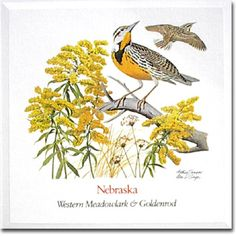 Nebraska-State Bird and Flower-Western Meadowlark and Goldenrod