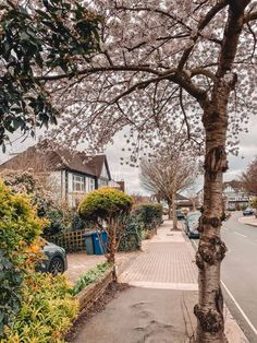 White cherry blossom in North London White City London, White Cherry Blossom, Hampstead Heath, Camden Town, Things To Do In London, London Restaurants, North London, London Life, Best Places To Eat
