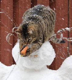 Difficile non ridere guardando queste fantastiche foto di gatti..