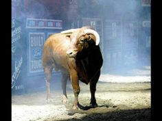 Some bulls that epoch and made history in the PBR
