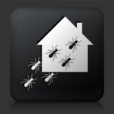 Black Square Button with Ants at Home Icon vector art illustration