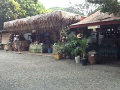 Macadamamia nut plantations in Ohau | Hawaii Inter-Island From Honolulu February 2-9, 2013
