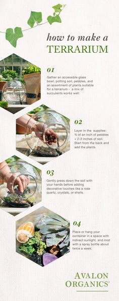 Create a simple connection to nature with this easy DIY terrarium. We recommend placing it in a space that could use a little extra greenery. How To Make Terrariums, Terrarium Plants, Potting Soil, Grow Your Own, Growing Plants, Greenery, Connection, Easy Diy, Succulents