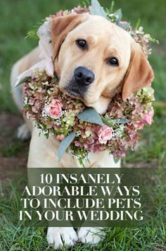 Don't forget about the cutest member of your family, your pet! We're wild about these ways to include your animal pal in your Big Day plans. http://www.colincowieweddings.com/articles/ceremony-reception/10-insanely-adorable-ways-to-include-pets-in-your-wedding