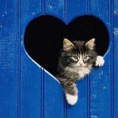 Gm  https://catdognews.blogspot.co.uk/