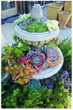 Succulents in a fountain. Beautiful