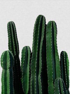 몬스테라(monstera) 액자 포스터 식물이미지 자료 요즘 데코 한다는 분들은 몬스테라(monstera)를 실제로 ...