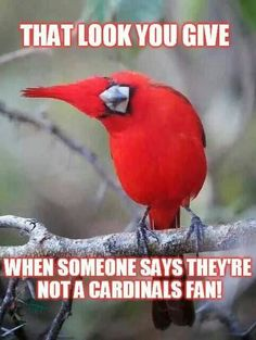 Cardinals fans are the best