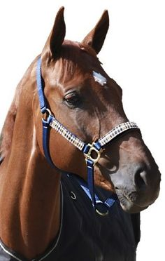 Kensington KPP Breakaway Halter Set with Padded Nose by Kensington. $58.82. Featuring the added breakaway safety measure. Below the buckle on the crown, a thin piece of leather is attached that will break under high pressure, allowing the horse to escape if he rears or bolts, preventing a potentially deadly accident. Features a snap at throat to ensure identical fit each time this halter is worn.