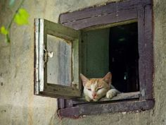 Ginger dozing in the window...