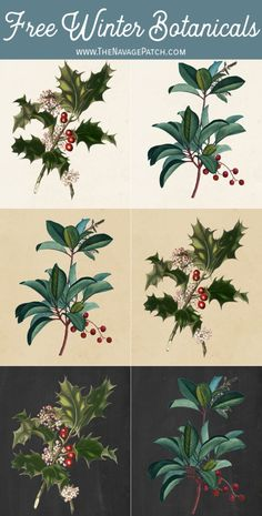 These 10 free winter botanical printables have a timeless, vintage look, and they're perfect to display all winter long on a gallery wall or individually! Botanical Posters, Vintage Botanical Prints, Vintage Art Prints, Botanical Drawings, Christmas Images, Christmas Art, Natural Christmas, Botanical Flowers, Botanical Art
