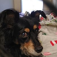 Pet Adoption Image By Dawn Z On Adopt In 2020 Pets