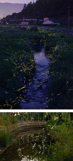 Firefly Trails: Photography by Tsuneaki Hiramatsu | Inspiration Grid | Design Inspiration