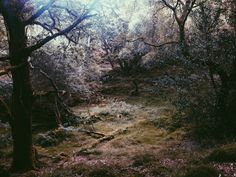 #wales oak forest | tim | VSCO Grid