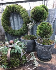 Without snow, I indulge in moss! Have a nice Friday night moss … - Best Garden Decoration Trends
