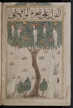 Wonders: the Waq-waq tree. Illustration of a tale. From a Arabic collectaneous manuscript known as Kitab al-bulhan. Medieval Manuscript, Medieval Art, Illuminated Manuscript, Tableaux Vivants, Iranian Art, Calligraphy Art, Islamic Calligraphy, Ancient Art, Islamic Art