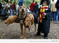i may be a girl, but i am sooo willing to dress up as harry potter and dress my black lab like this for halloween...