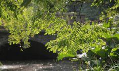 https://flic.kr/p/MQbvis | Autumn Sun | Peckham Rye Park little bridge & pond in the warm autumn sun www.adamswaine.co.uk