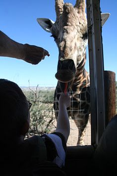 Out of Africa Wildlife Park... Camp Verde, Arizona