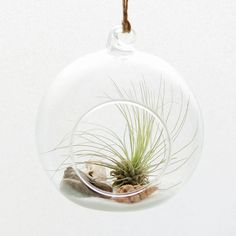 DingaDing Terrariums Beach Themed Air Plant Hanging Terrarium ($28) ❤ liked on Polyvore featuring home, home decor, floral decor, glass terrarium and glass home decor
